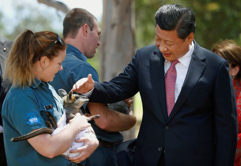FILE PHOTO: China's President Xi Jinping pats a swamp wallaby being held by Renne Osterloh on the grounds of Government House in Canberra