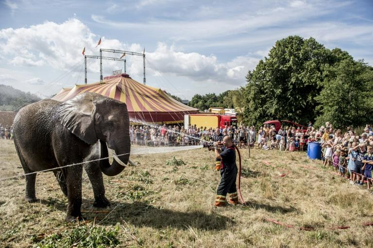 Denmark is set to retire its last four circus elephants. Here, firefighters spray water to cool an elephant in high temperatures at the Arene circus in Gilleleje