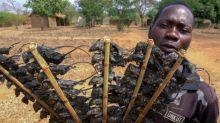 Pour survivre, les populations pauvres du Malawi font la chasse aux souris