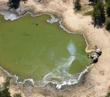 Nerve agent fear as hundreds of elephants perish mysteriously in Botswana