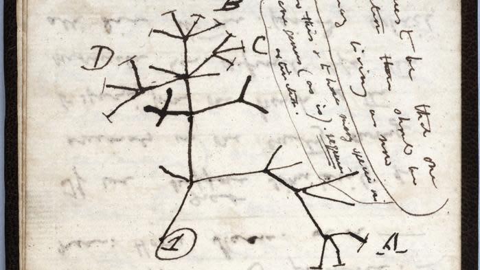 """L'université de Cambridge lance un appel à l'aide pour retrouver deux précieux carnets de Darwin """"volés"""""""