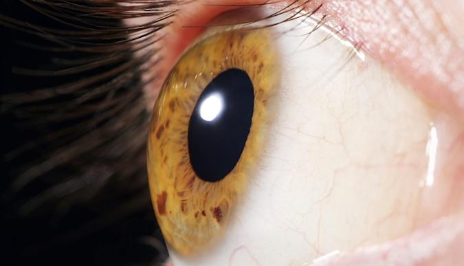 Algae DNA could help the blind see in upcoming trials