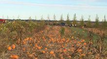 Black Fox Farm and Distillery celebrates annual pumpkin festival