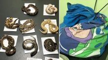 RSPCA investigating after 13 snakes found in child's pillow case