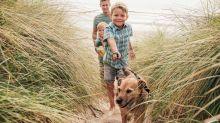 Worauf Sie bei Reisen mit dem Hund unbedingt achten sollten