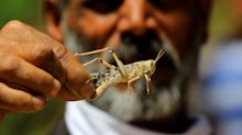 PHOTOS: Locust Swarms Invade Maharashtra And Rajasthan, Alert In Delhi, UP Districts