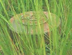 """New """"imaging machines"""" distinguish between grass and camouflage"""