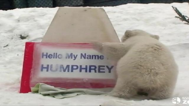 Unbearably Cute Cub's Name Reveal