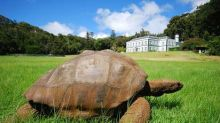 This Tortoise the Oldest Creature on the Planet. Respect