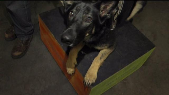 How Rescue Dogs Are Helping Veterans With PTSD