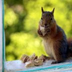 Squirrel tests positive for bubonic plague in Colorado, leading to health warning