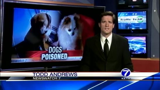 $1,000 reward offered for info about poisoned dogs