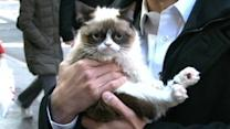 Grumpy Cat: Exclusive Interview With Feline Phenom