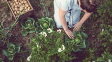 Veganes Gärtnern ist der neue Trend