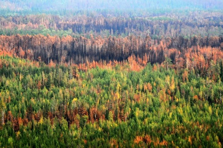 Russia struggles with wildfires in its remote taiga every summer (AFP Photo/Ekaterina ANISIMOVA)