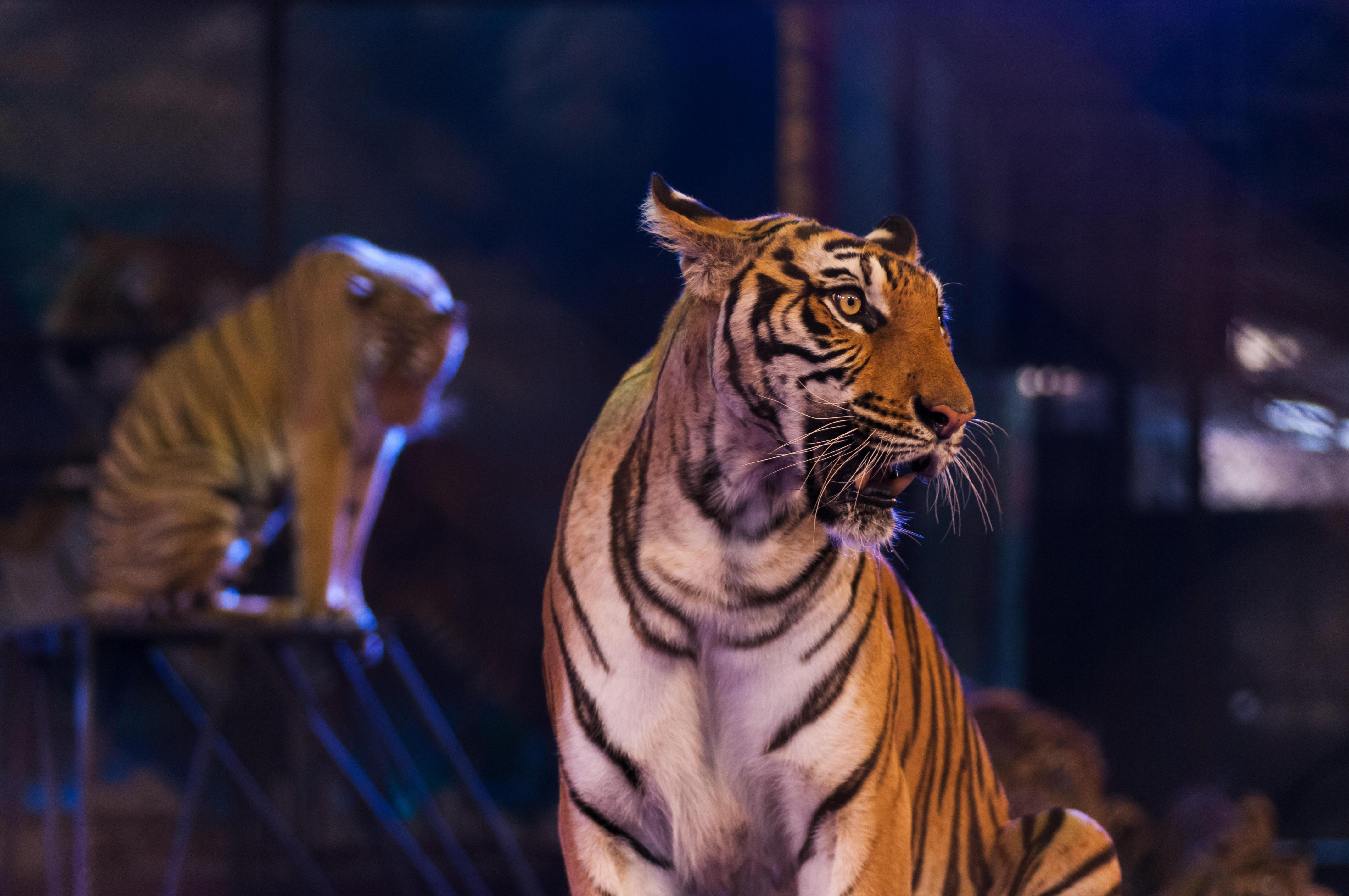 France planning to ban wild animals from traveling circuses