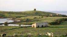 L'Asinara verrà liberata dagli animali introdotti all'epoca del carcere