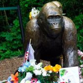 Guys, your Harambe memes are making the Cincinnati Zoo sad