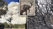 'Catastrophic': Hazard reduction burn review after wildlife deaths