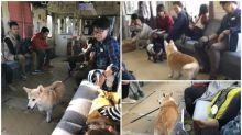 【新片速報】日本「海濱鐵道列車」 狗狗專用全車都係狗