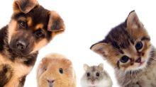 貓奴狗奴要份外留意化學物質對寵物致命!4個保護毛孩安全的「家居消毒方案」