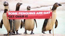 Londoner Zoo klärt über homosexuelle Tiere auf