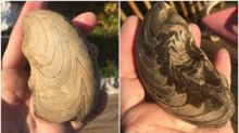 A 'work of art': Amateur fossil hunter discovers stunning cephalopod in N.W.T.