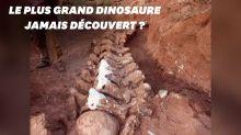 En Argentine, le squelette d'un immense dinosaure découvert