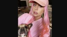 Lady Gaga offers $500K reward for return of French bulldogs after dog walker shooting and theft