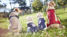 Good News des Tages: Ein Blindenhund für einen blinden Hund