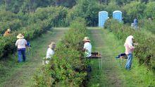 Corte dictamina que trabajadores agrícolas de Nueva York pueden sindicarse