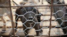 Aust Unis in rabies vaccine development