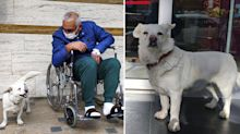 Devoted dog spends days outside hospital waiting for owner