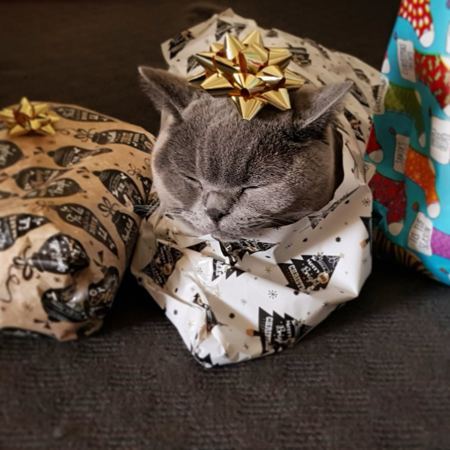brilliant woman shows us how to wrap a cat for christmas - How To Wrap A Cat For Christmas