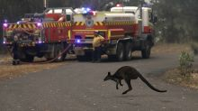 Australia's most populous state declares wildfire emergency