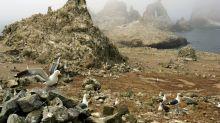 La guerra de los huevos que devastó a Los Farallones californianos
