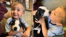 Adorable moment boy adopts puppy which shares something in common with him