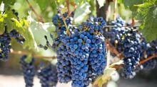 Groupement foncier viticole : principe et fiscalité