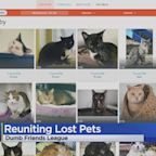 Dumb Friends League Working To Reunite Pets Who Got Out During 4th Of July Weekend With Their Owners