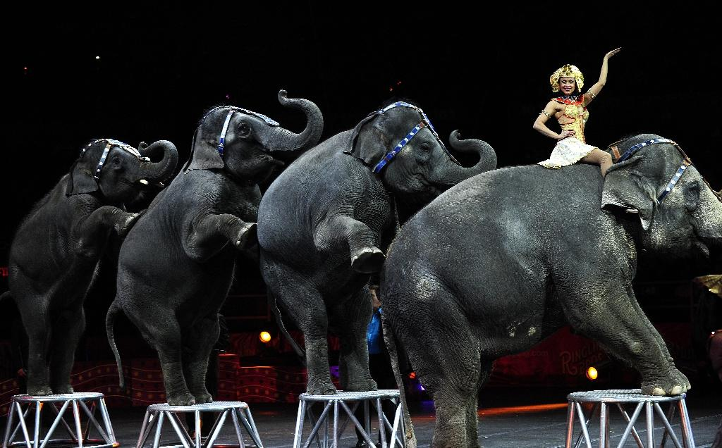 In May 2015 Ringling Bros. and Barnum & Bailey Circus retired its performing elephants after major criticism from animal rights groups (AFP Photo/EMMANUEL DUNAND)