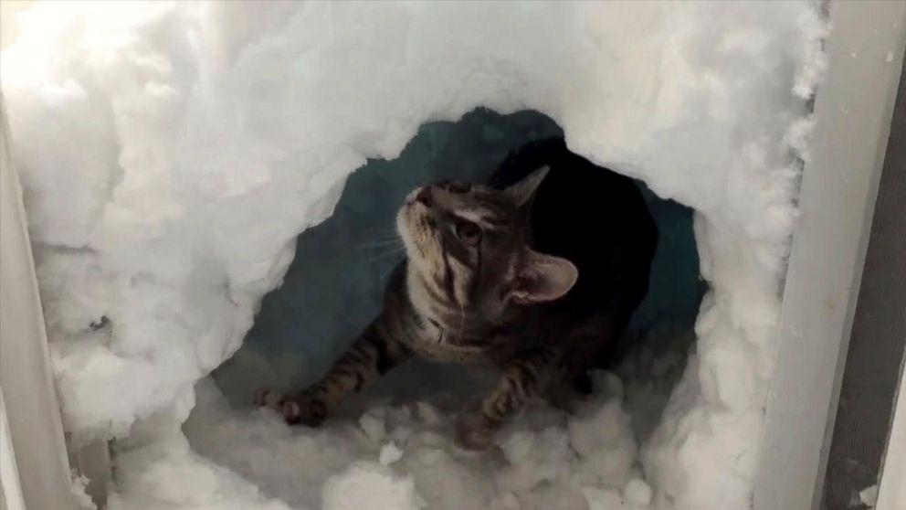 Adorable Cat Builds Mini Igloo for Himself During Denver Blizzard