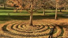 Las obras de Joanna Hedrick, reinas del otoño en Sacramento