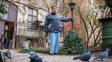 250.000 Euro Strafe: Hamburgerin darf Tauben im eigenen Garten nicht füttern