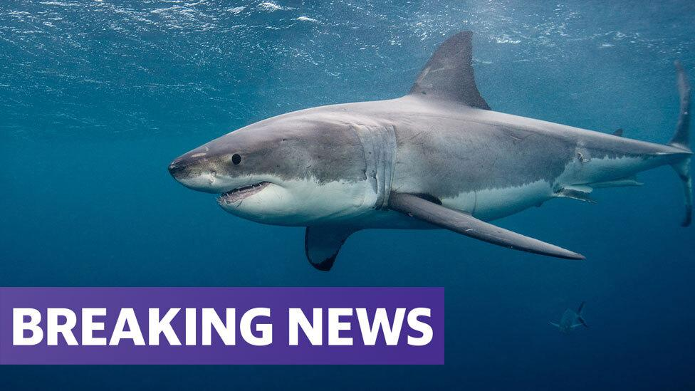 Surfer killed in shark attack off NSW coast