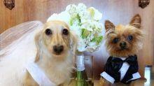 Tommy Lee y Brittany Furlan ya están casados