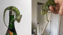 Meet the chameleon who is slowly taking over Instagram