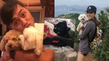 使用釘帶保護狗隻安全 何雁詩:我們愛Riley