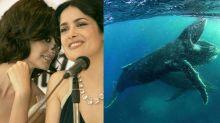 Penélope Cruz será la voz en España de la serie documental de Netflix Nuestro Planeta