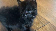 El curioso caso de Duo, la gata que nació con dos caras