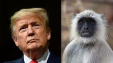 Despite heavy security, five langurs to be deployed to protect Donald Trump in Agra